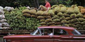 Cuba: The dynamics of interests
